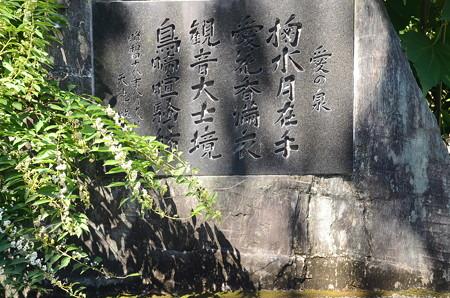 白式部(シロシキブ)