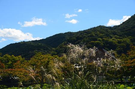 秋景色の天龍寺