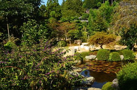 池脇のコムラサキ