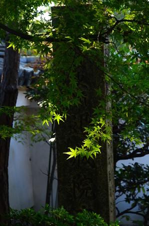 緑の退蔵院