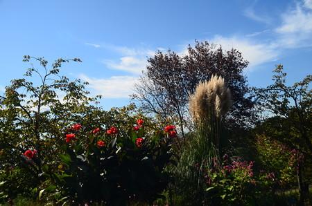 秋の宇治市植物公園