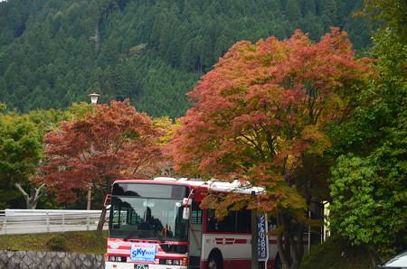 横川バス停脇の色付き