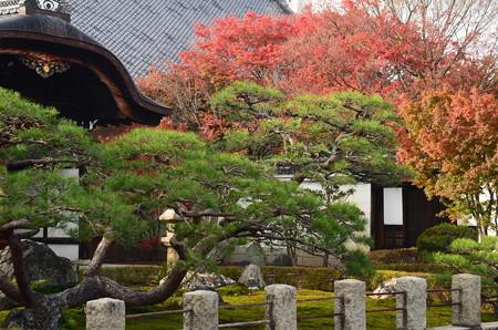 妙覚寺の色付き