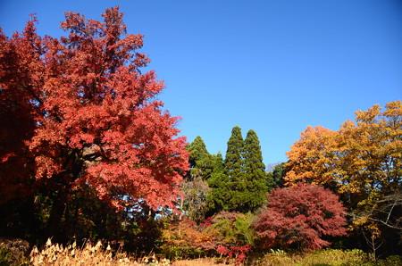 紫陽花園の秋彩