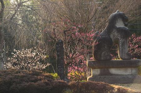 梅に囲まれる狛犬