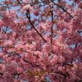 写真: 春色に染めて~