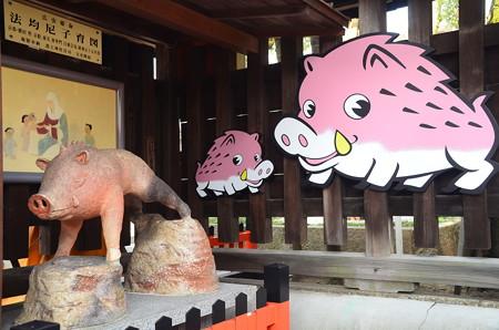 猪が一杯~~~