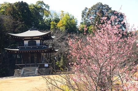 観音堂と桜