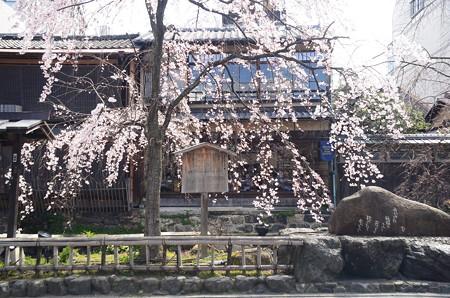 「かにかくに」の碑と枝垂れ桜
