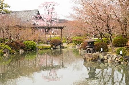 春を浮か  べる瓢箪池