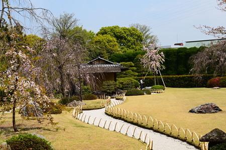 桜咲く室町の庭