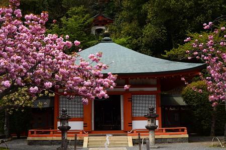 光明心殿前の関山
