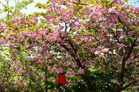 千本ゑんま堂の普賢象(フゲンゾウ)