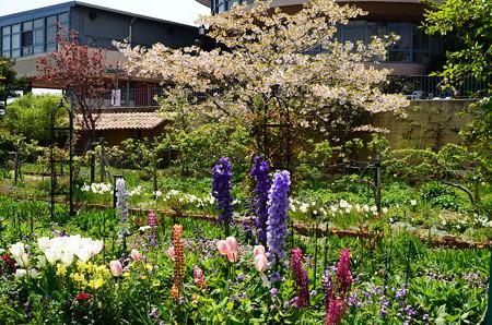桜の前の花々