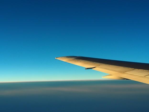 夕日を浴びる翼