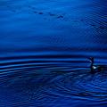 写真: 波紋