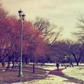 写真: 雪残る散歩道