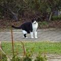 白黒猫ちゃん2_7674