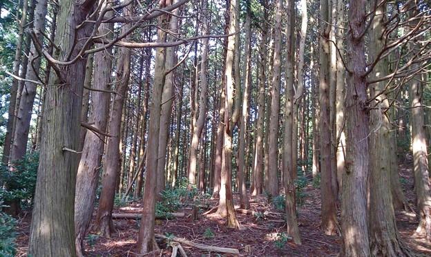 神奈川県厚木市 鐘ケ嶽 林間