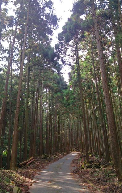 神奈川県厚木市 鐘ケ嶽登山道 (2)