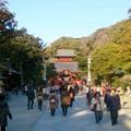 Photos: 鶴岡八幡宮 遠距離