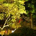Photos: 石観世音ライトアップ1