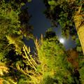 写真: 石観世音ライトアップ2