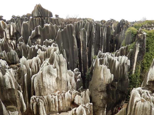 雲南省 世界遺産 石林 #11