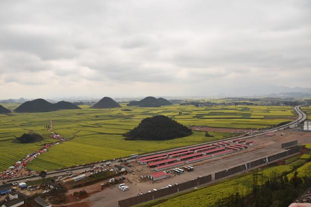 雲南省羅平 金鶏峰の菜の花畑#6