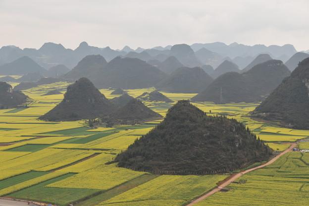 雲南省羅平 金鶏峰の菜の花畑#7