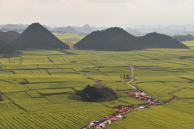 雲南省羅平 金鶏峰の菜の花畑#9