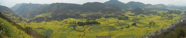 雲南省羅平 牛街の菜の花畑#1