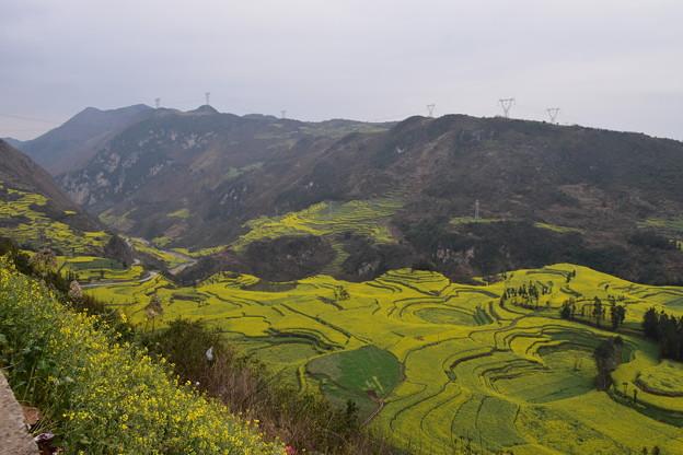 雲南省羅平 牛街の菜の花畑#8