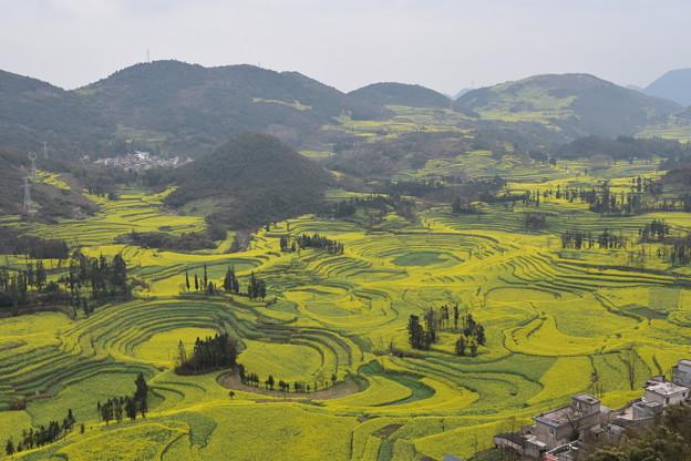 雲南省羅平 牛街の菜の花畑#9