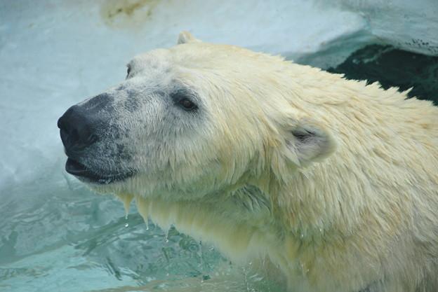 水も滴るいい熊