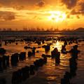 Photos: Sunset at Pak Nai