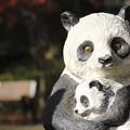 Photos: PANDA
