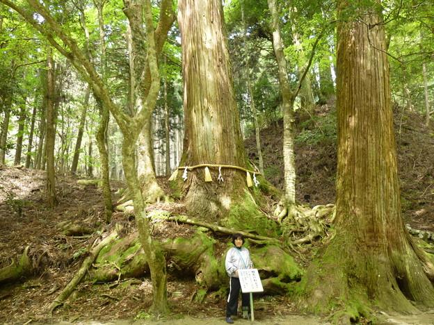 貴船神社の杉