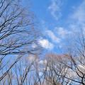 枯れ木と冬空
