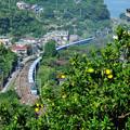 Photos: みかん山のカーブを行くEF66型電気機関車が牽引する貨物列車