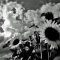 写真: モノクロームの夏
