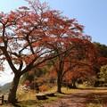 Photos: 上平公園の紅葉