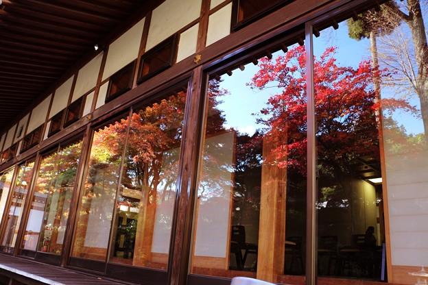 ガラス戸の紅葉