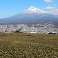 Photos: 富士山・市街地・お茶畑