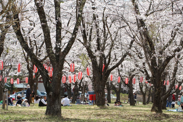 桜まつり会場