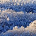 Photos: 初冬の樹氷?( ゚Д゚)