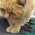 写真: 朝会えなかったから会いにきたよ!猫と食べ物の写真ばっかりだなぁ(笑)