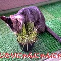 Photos: 050802-【猫写真】べじたりにゃんにゃ!