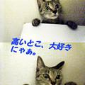 Photos: 2005/9/4【猫写真】高いとこ大好きにゃ!