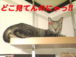 2005/9/14【猫写真】どこ見てんのにゃ!!